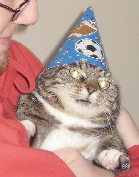 Cat Magician Russian Meme