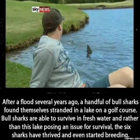 Golf Course Memes Sharks in a Golf Course Pond