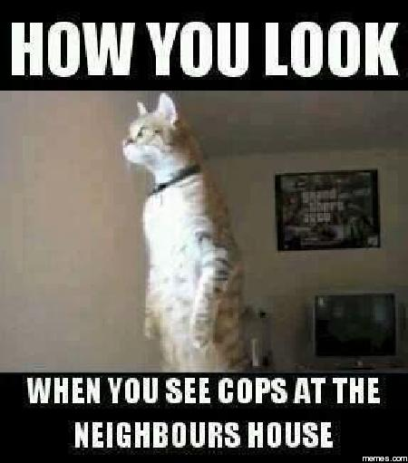 Funny Memes For Neighbors : Cops at the neighbor s house memes
