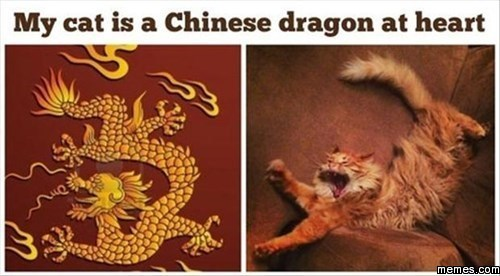 My Cat Is a Chinese Dragon