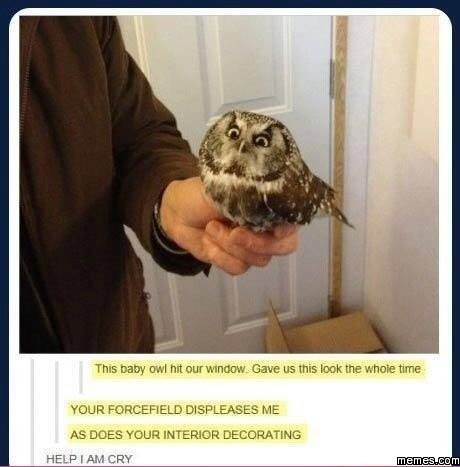 Baby Owl Memes Baby Owl Hit Our Window