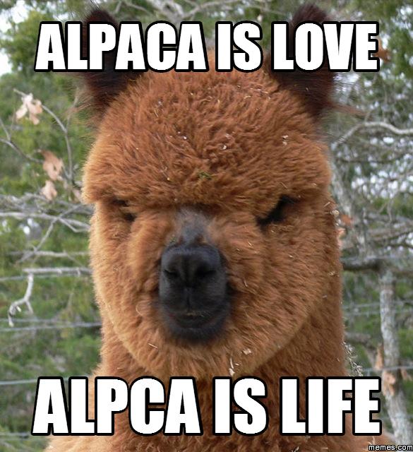 Alpaca is love Alpca is life   Memes.com