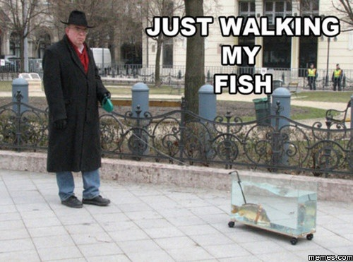 Just walking my fish for Fish on a leash