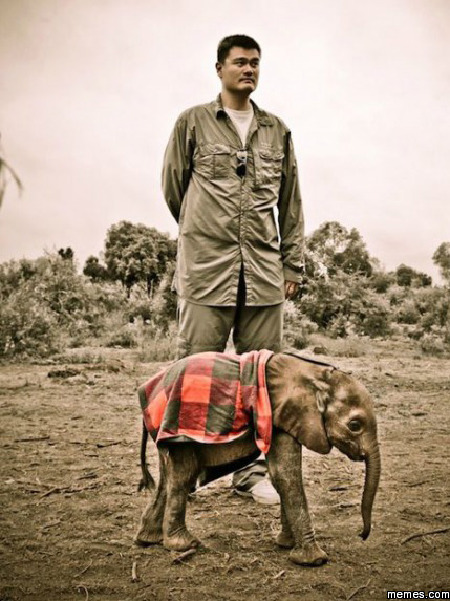 Yao Ming next to a baby elephant