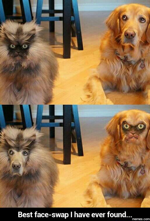 Best face-swap ever