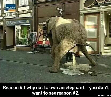 how to buy an elephant