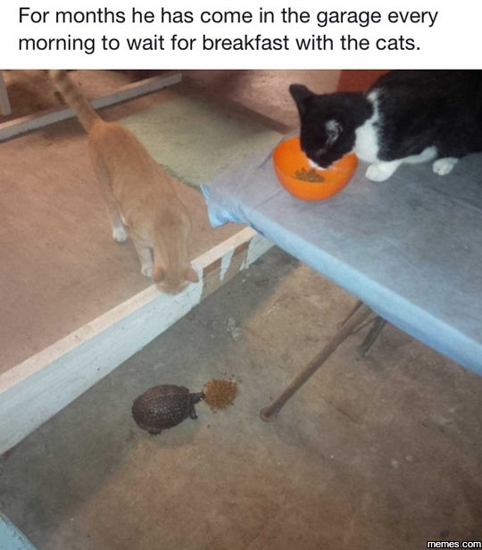 Breakfast with the cats