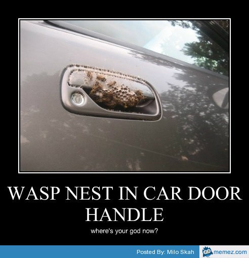 wasp meme MEMES Wasp Nest In Car Door