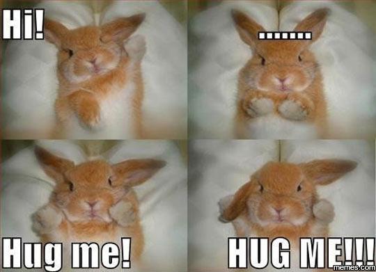Bunny wants a hug