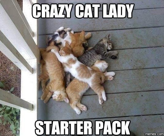 You Funny Lady Meme : Crazy cat lady memes