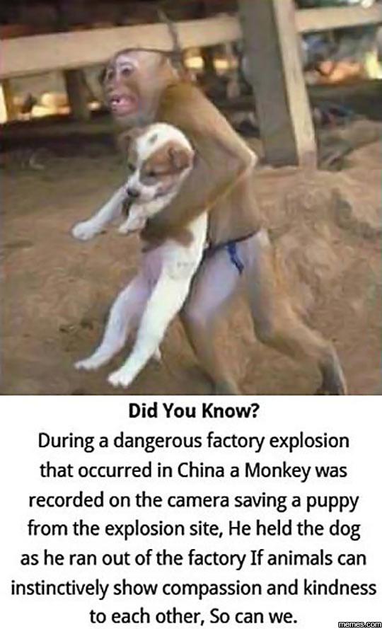 Dog Saving Human Stories