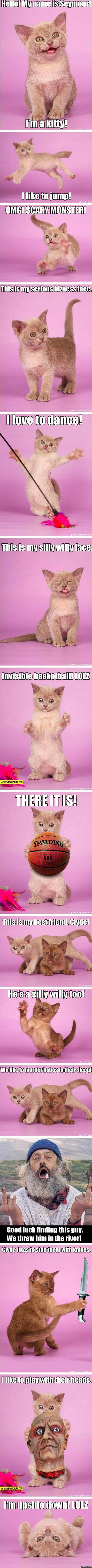Seymour the kitty