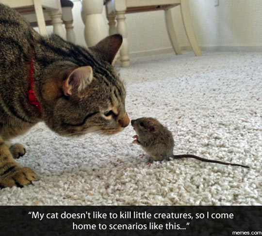 My cat doesn't like to kill creatures