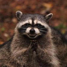 evil-plotting-raccoon.jpg