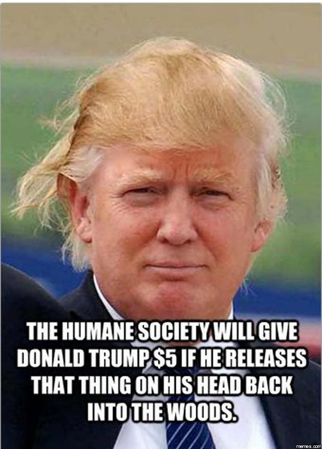 donald trump hair meme donald trump s hair memes com