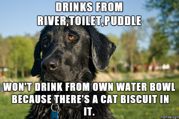 dating black lab memes