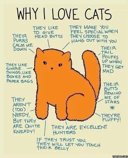 love cat memes - photo #35